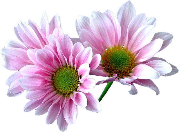 http://papillon1964.centerblog.net