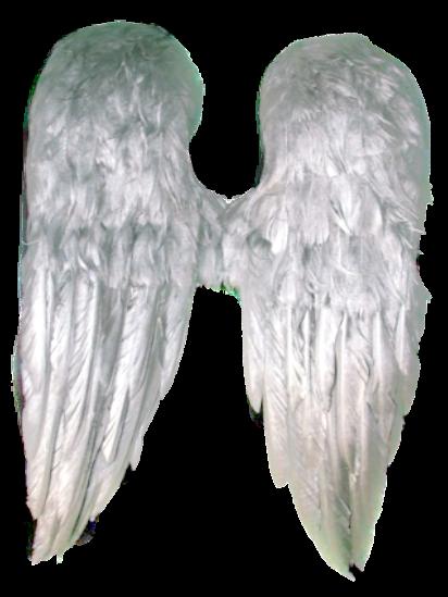 papillon1964